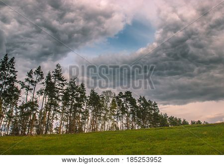 Stormy and windy day at the forest. Rain over pine trees
