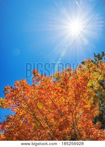 Colorful and bright autumn tree top leaves against sunny blue sky. Copy space.