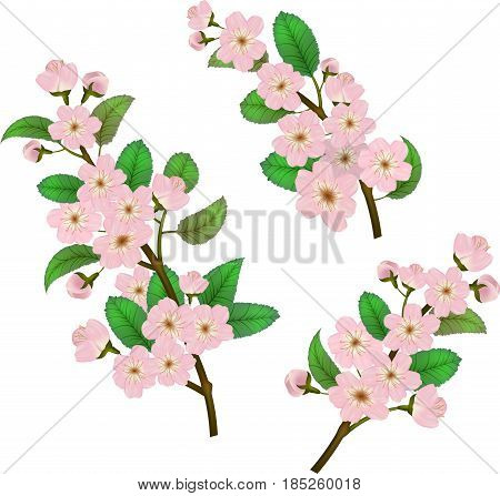 Set of spring flowers isolated on white background. Blossoms sakura cherry flowers buds and leaves. Easy editable twigs for your design