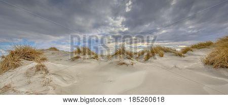 Young Coastal Dune Landscape