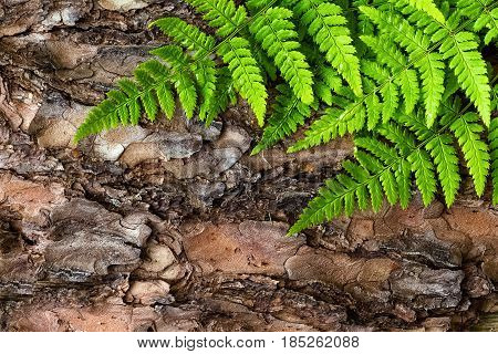 Green fern leaves background on bark tree top view