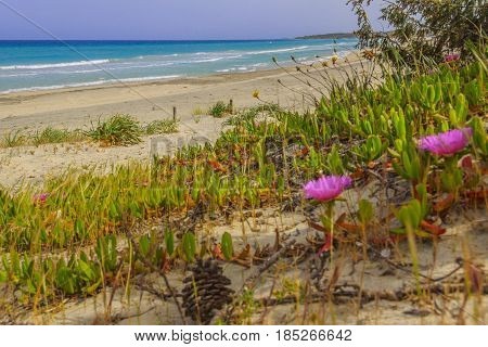 The most beautiful sandy beaches of Apulia.Salento coast: Alimini Bay, ITALY (Lecce). From Torre Dell'Orso and Otranto the sandy coastline is characterized by dunes covered with Mediterranean maquis.