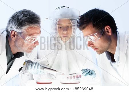 Health care researchers working in high level of protection scientific laboratory. Focused young life science researcher pipetting cell colonies into petri dish monitoring their growth.