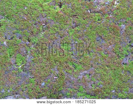 Detail of a concrete surface covered with green mosses