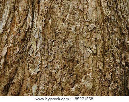 Texture of an old tree bark with deep grooves