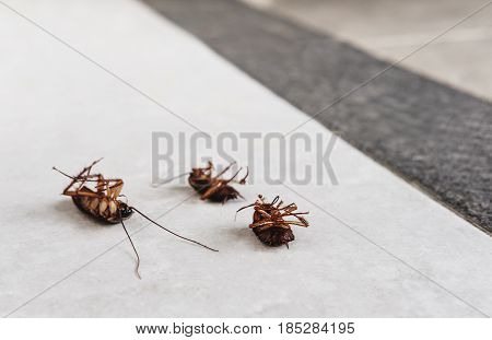 Dead cockroaches on the floor with copy space, killed cause of bacteria and disease in the house