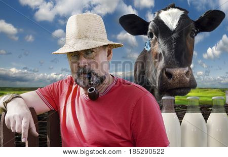 Farmer with a smoking pipe in a pince-nez and a cow on a green meadow background. Farm products-milk