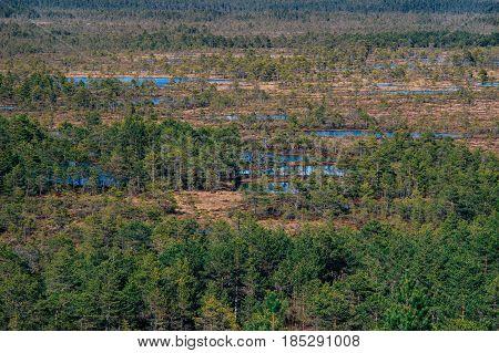 Suru Suursoo bog aerial view by early spring Harju county Estonia
