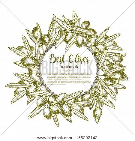 Green olives vector for olive oil product or Italian cuisine or restaurant design. Olive tree branches wreath of fresh harvest fruits for natural organic food store, cooking or pharmaceutical industry