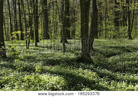 Flowering green forest in spring. Concept of creativity in education. Spring awakening of flowers and vegetation in the forest.