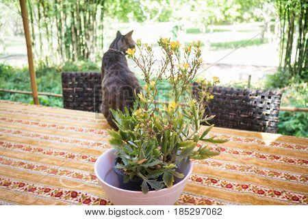 Cat Chilling Out On Dinner Table stock photo
