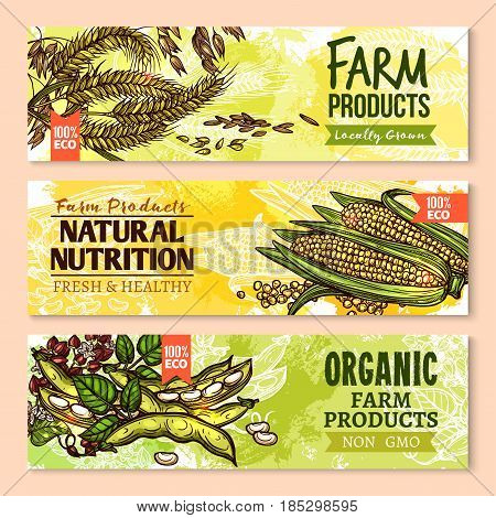 Cereals and grain vector banners set. Farm grown wheat and rye ears, buckwheat seeds and oat or barley millet harvest, organic corn and rice with legume beans or pea. Eco non gmo agriculture design