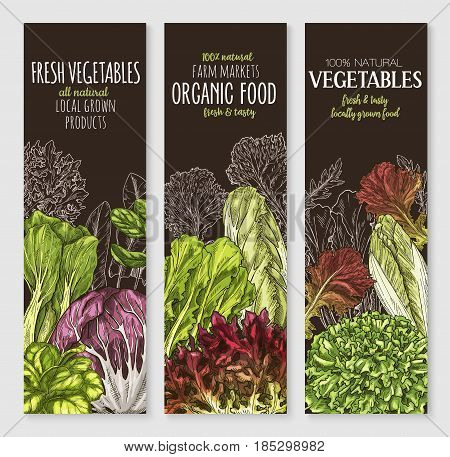 Salads and farm leafy vegetables vector banners. Lettuce veggies harvest arugula, corn salad and pak choi of chicory, oakleaf or watercress salad and gotukola leaf, collard and swiss chard cabbage