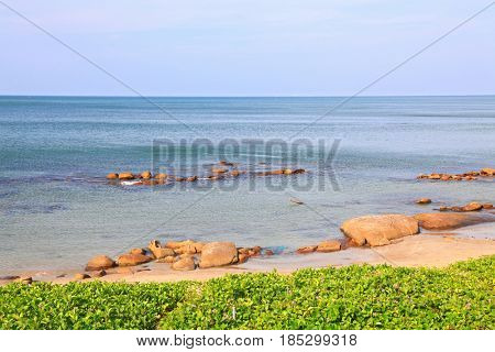 landscape of beach grass, Ipomoea pes-caprae Sweet, with rock and ripple in Rayong beach Thailand.