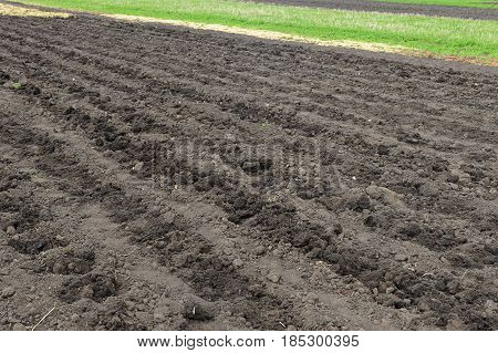 Plowed fertile field with chernozem on a spring morning