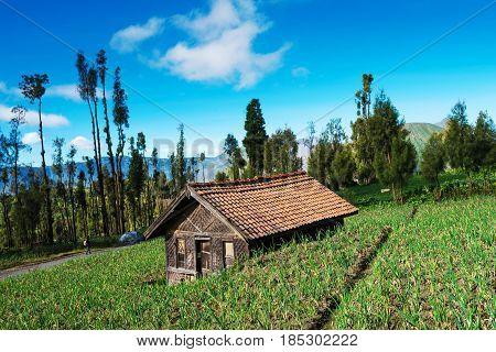 Village At Mount Bromo In Bromo Tengger Semeru National Park, East Java, Indonesia.