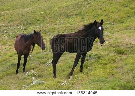 Portrait of two wild horses in the mountain