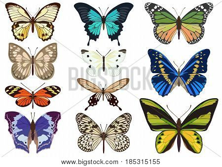 Collection of vector images of different-colored butterflies of different types in a flat style.