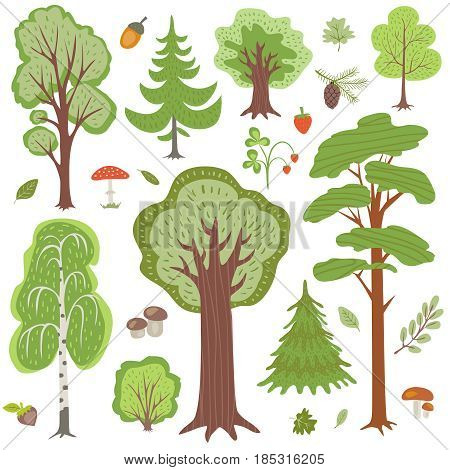 Forest trees, plants and mushrooms, other woodland floral vector elements. Floral tree nature, illustration of wood mushroom and tree