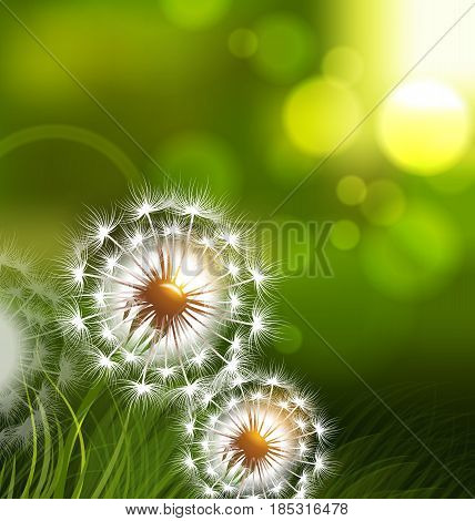 Dandelion field vector spring conceptual background. Realistic dandelion flower, illustration of fluff dandelion on green field