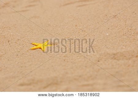 Summer concept, Idea for starfish on sand with space for text. Starfish on sent at the beach