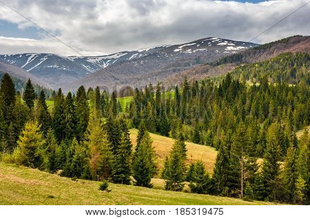 Snowy Tops Of Carpathians In Springtime