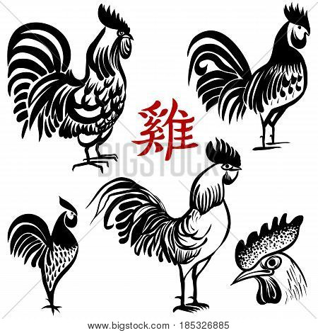 Ink hand drawn Rooster. The symbol of the Chinese New Year 2017. Sketch style. Vector illustration Chinese brush painting. Chinese Translation: Rooster.