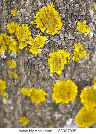 old tree bark with yellow mould on its surface