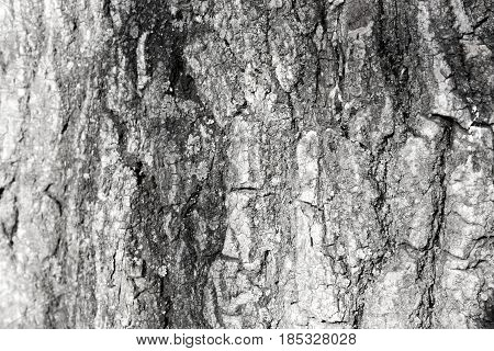 bark of tree. nature. Background texture. Photo for your design