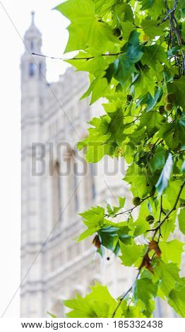 Tree Leaves With Bokeh Detail Of London's Westminster Palace Architecture
