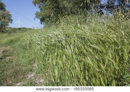 Green grass bunch and background a wind shovel to understand a concept of environment and safeguarding the territory