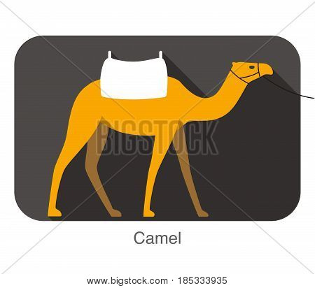 Camel Walking On The Ground, Flat Icon, Animal Series
