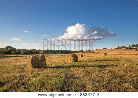 Several round haystacks, lit by the setting sun, lie on a beveled meadow under a blue sky with a big cloud