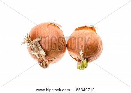 Organic Bio Homegrown Unpeeled Yellow Onion Isolated On White Background.