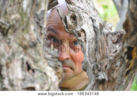 Man's eyes peeking through dry tree. Men's eyes close-up