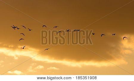 a flock of birds at dawn, the sun . A photo