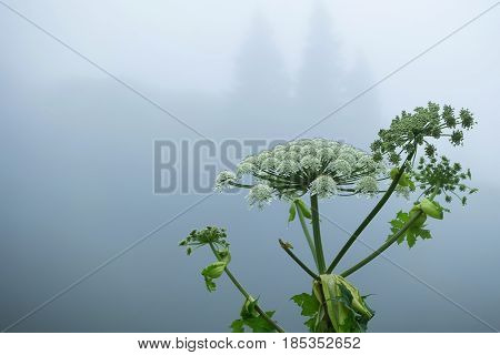 Mysterious fantasy landscape with fog in forest glade