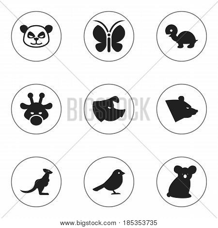 Set Of 9 Editable Animal Icons. Includes Symbols Such As Sow, Crow, Grizzly And More. Can Be Used For Web, Mobile, UI And Infographic Design.
