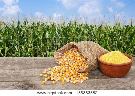 uncooked corn seeds in burlap sack and cornmeal in bowl on wooden table with green field on the background. Agriculture and harvest concept. Maize with maize field background