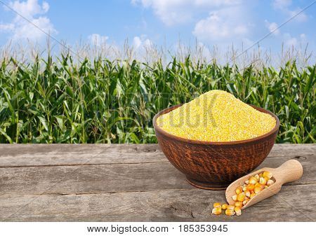 uncooked cornmeal in bowl with scoop on wooden table with green field on the background. Agriculture and harvest concept. Maize with maize field background