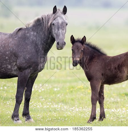 Mae And Foal