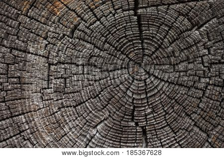 the old wood background with the cracks