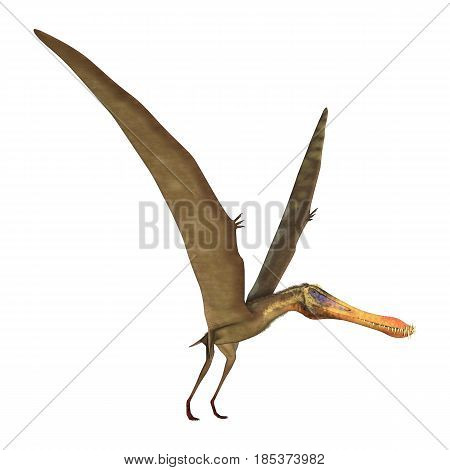 3D Rendering Pterodactyl Anhanguera On White