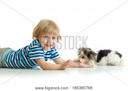 Friendship between child and cute dog Yorkie terrier. Isolated on white.