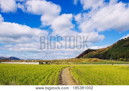 Blue sky and white grassland without people
