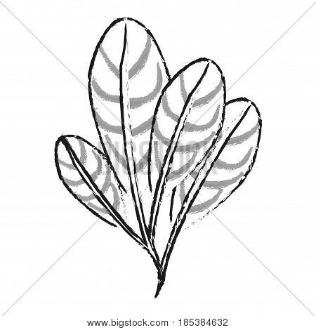 blurred silhouette image set elongated leaves with ramifications vector illustration