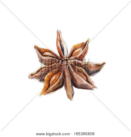 The national spice anisetree on white background watercolor illustration in hand-drawn style.