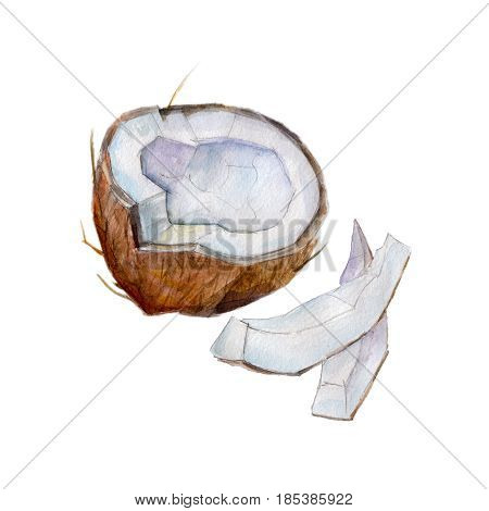The half coconut with slices on white background watercolor illustration in hand-drawn style.