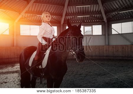 Beautiful elegant young blonde girl sits on a her black horse dressing uniform competition white blouse shirt and brown pants. Indoor portraite in riding hall.