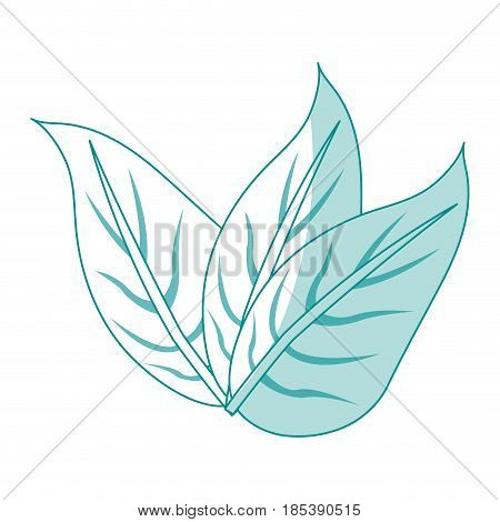 blue silhouette image set leaves with ramifications vector illustration